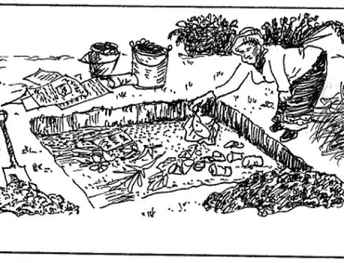 Trench beds (deep trenching, fertility trenches)