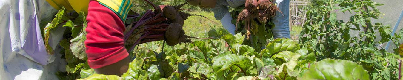 Climate Smart Agriculture Amanzi For Food